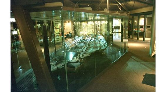 The Dover Bronze Age Boat.  I could stare at it for hours, it's really beautiful.  It is the world's oldest known seafaring boat.
