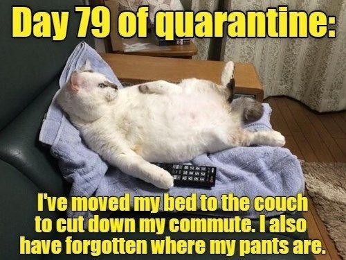 Top 25 Memes Of The Week Cheezburger Users Edition 144 Funny Cat Memes Funny Animal Memes Cat Memes