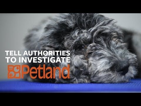 Urge Petland To Stop Selling Sick Puppies The Humane Society Of