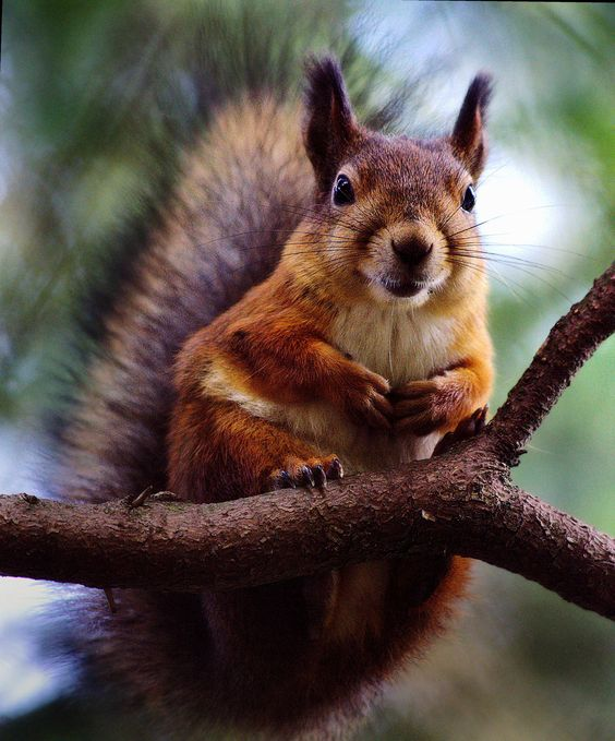 Red Squirreled by Richard Beresford Harris on 500px