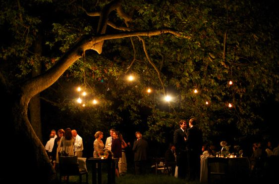 Big Tree + Lot's of Fairy Laterns = Hobbit Birthday Party. It WILL happen.