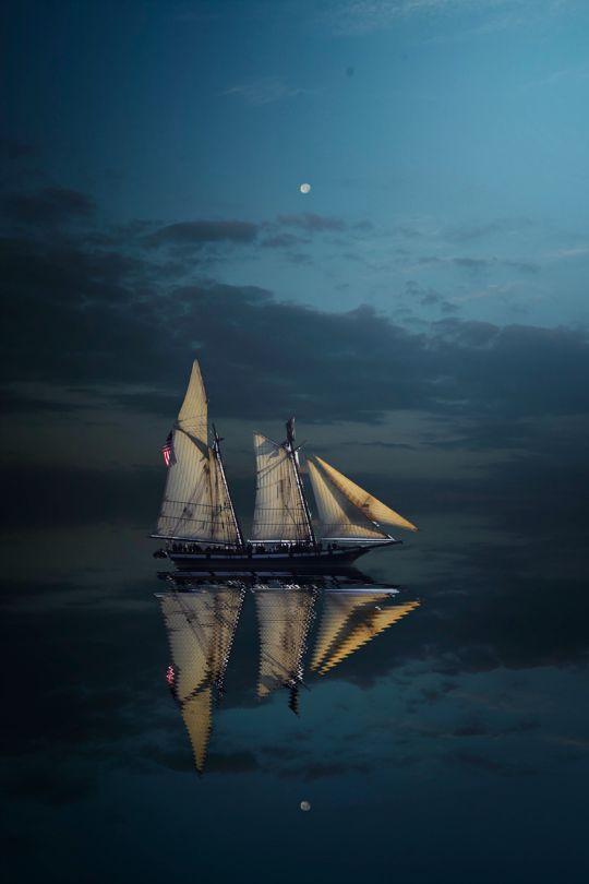 tulipnight:  When The night Comes byUzair Aziz