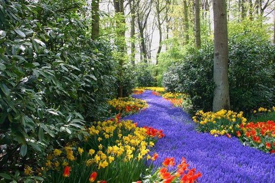 Paysages -Printemps -Eté rivière de fleurs