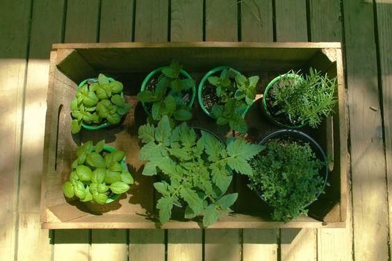 Hierbas aromaticas hierbas especias y condimentos en la - Plantas aromaticas en la cocina ...