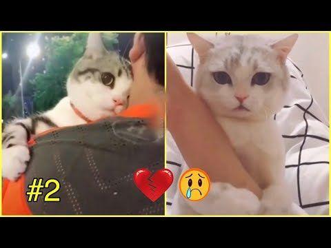 ردة فعل القطط عند رؤية اصحابها حزينين الطف قطط شفتها بحياتي 2 Youtube Cao E Gato Gatos Caes