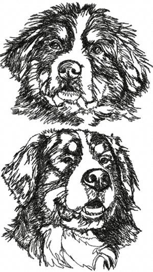 Advanced Dog Coloring Pages : Advanced embroidery designs bernese mountain dog set