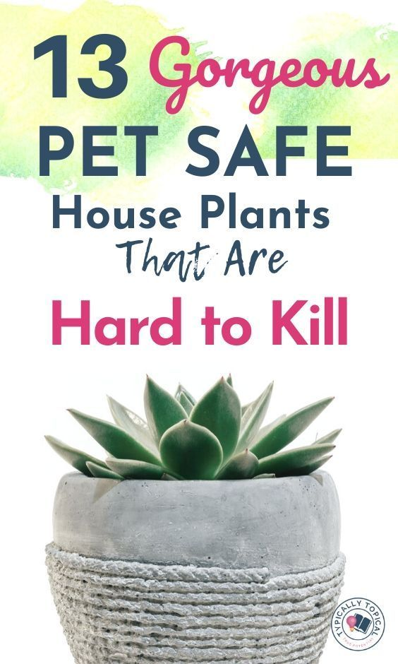 13 Pet Friendly Indoor House Plants That Look Amazing And Are Low Maintenance Typically Topica Dog Safe Plants House Plants Indoor Indoor Plants Pet Friendly