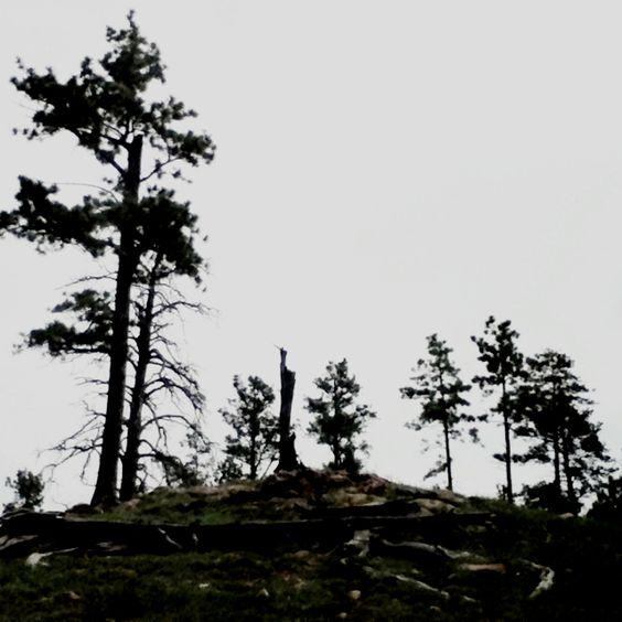 Trees :) (I took this)