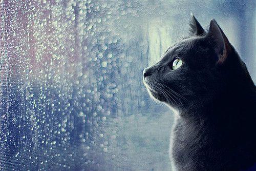 黒猫・至高の美【画像】:ハムスター速報