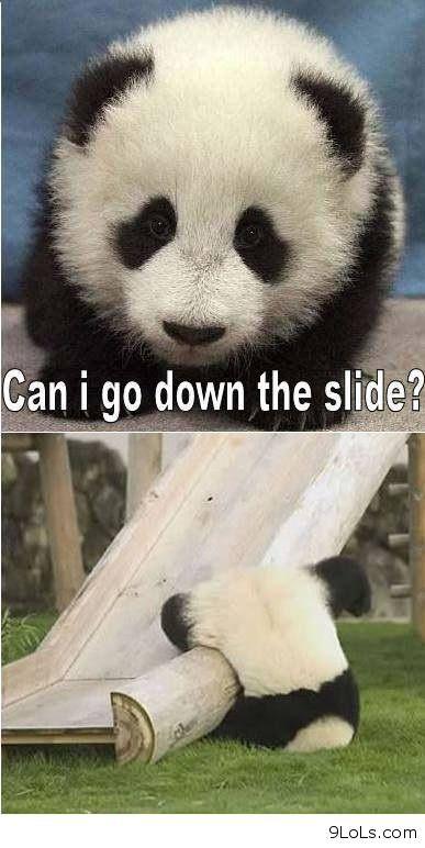 Funny Panda http://9lols.com/funny-panda/