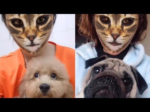 Dogs Hilarious Reaction When They See Cat Filter On Owners Faces Funny Dog Videos 2019 Youtube Fur Babies Wonderong Wh Funny Cat Faces Dog Gifs Funny Dogs