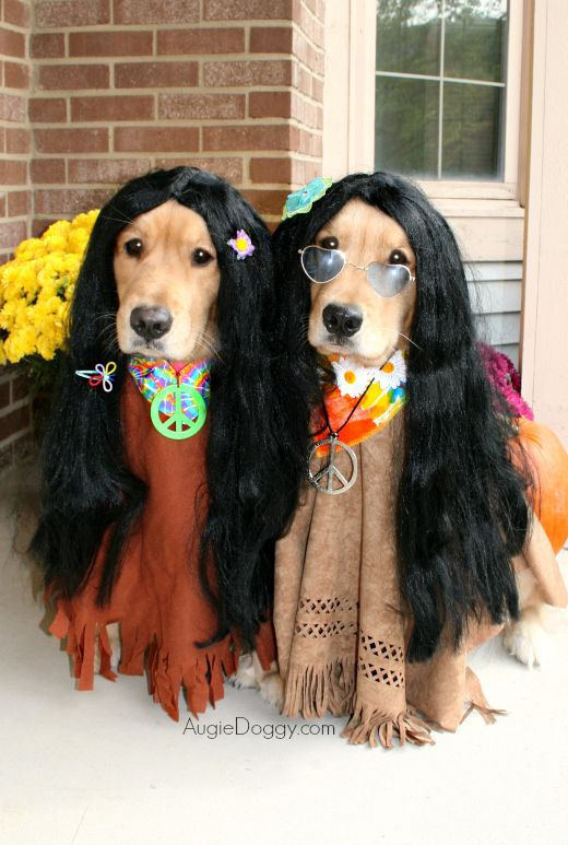 Dog Halloween Costume Golden Retriever Halloween Beauty And The