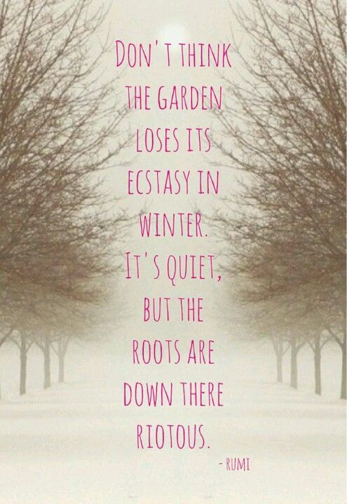 """Don't think the garden loses its ecstasy in winter..."" Rumi:"