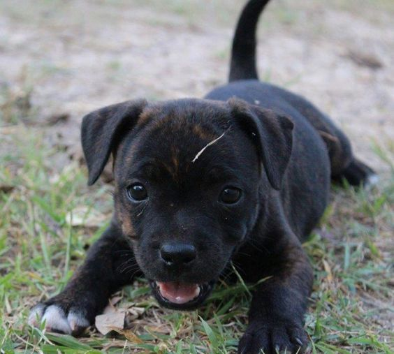Just love puppies