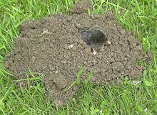 Maulwurfshügel – Wikipedia