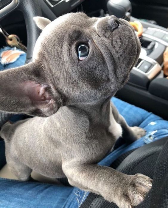 5 Signs Your Dog Is Your Child In 2020 Cute Baby Animals Cute Animals Baby Animals Pictures