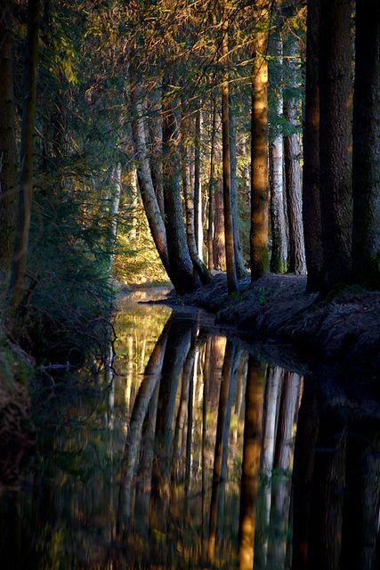 Dark Forest, Nagel, Bavaria, Germany    photo via gerrie