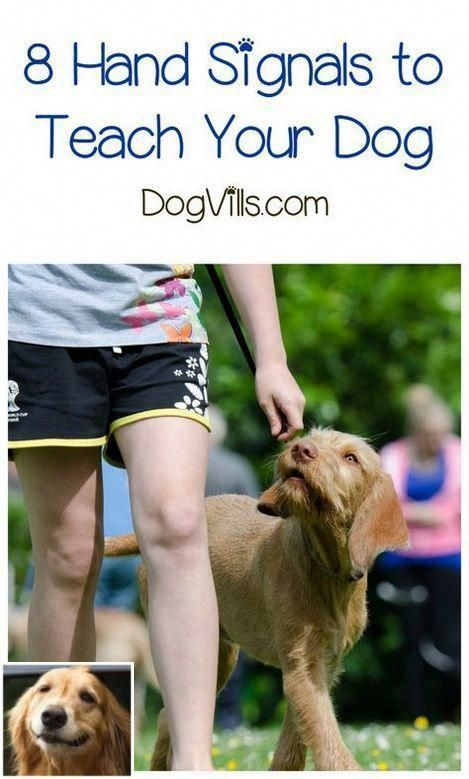 Pin By Dog Training Spot On Basic Obedience Training In 2020 Dog