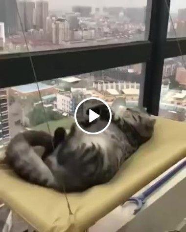 Deixe o gatinho descansar ele teve um dia agitado