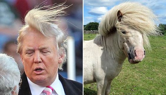 Donald Trump's Hair: What Is It?