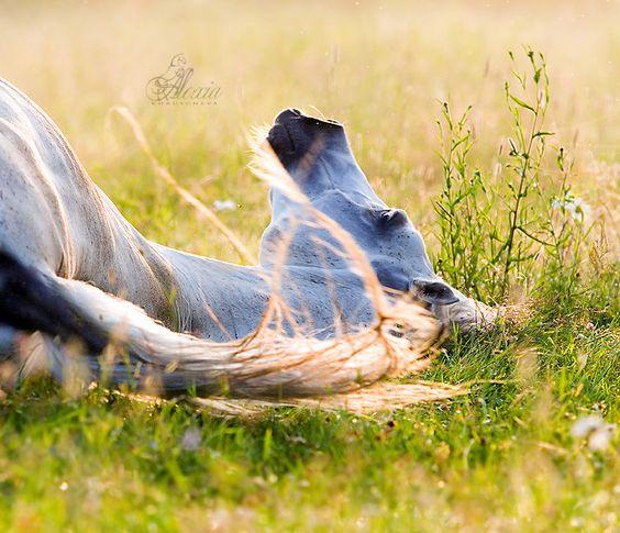 Arabian mare: Beautiful Horses, Horses Learn, Horses Horses, Horses Daydream, Spring Horses, Pretty Horses, Animals Horses, Arabian Horses