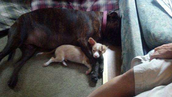 Bella snuggling chico