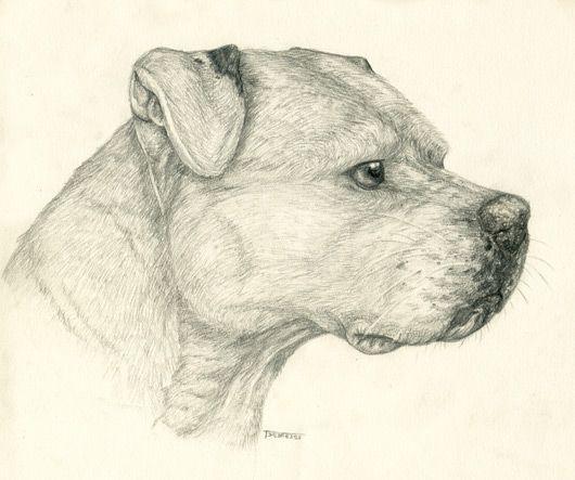 Pencil Pitbull | Things I love | Pinterest | Dibujos ...