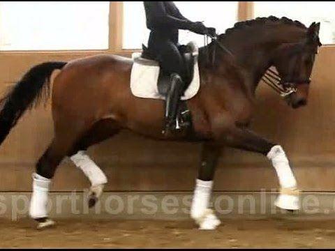 www.sporthorses-online.com 2006 St Georges/Inter gelding  17.2 hh for sale