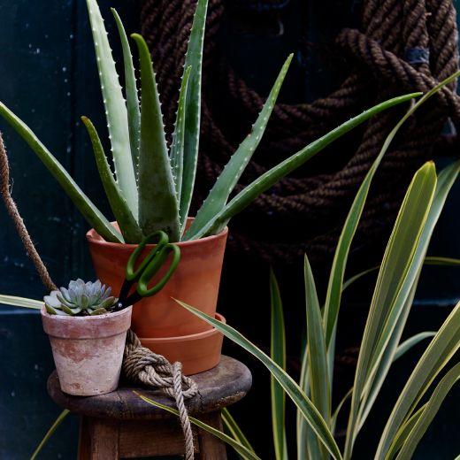 ei blomsterpotte og sk l i terrakotta med ei aloe vera plante i outdoor pinterest. Black Bedroom Furniture Sets. Home Design Ideas