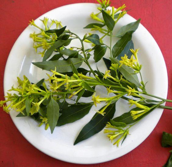 """v e r d e c h a c o: Creencias populares: """"Las plantas y la buena suerte (salud, dinero y amor)"""" 3"""