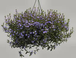 Image result for flowers around in september in australia