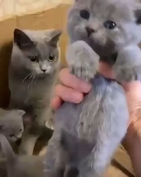 Cats Kitten On Instagram New Mom Cat Kittens Meows For More If You Like It Pls Support Wi Cute Animals Cute Baby Animals Cute Cats And Kittens