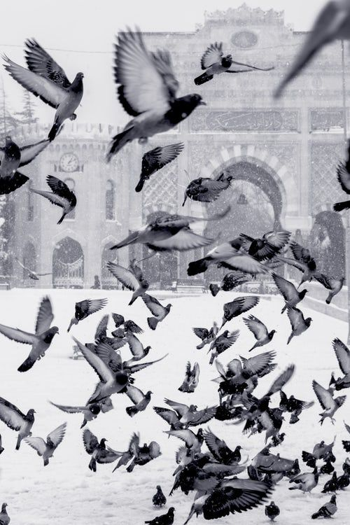 Pigeons Flying Above Snow Covered Field Abstract Artwork Bird Artwork Preppy Wallpaper