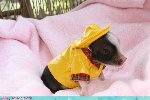 crap i love dressed up animals. whats wrong with me