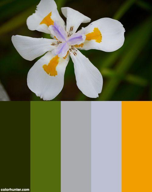 Butterfly Iris Color Scheme