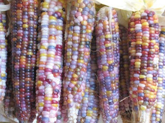 Colorful Corn!