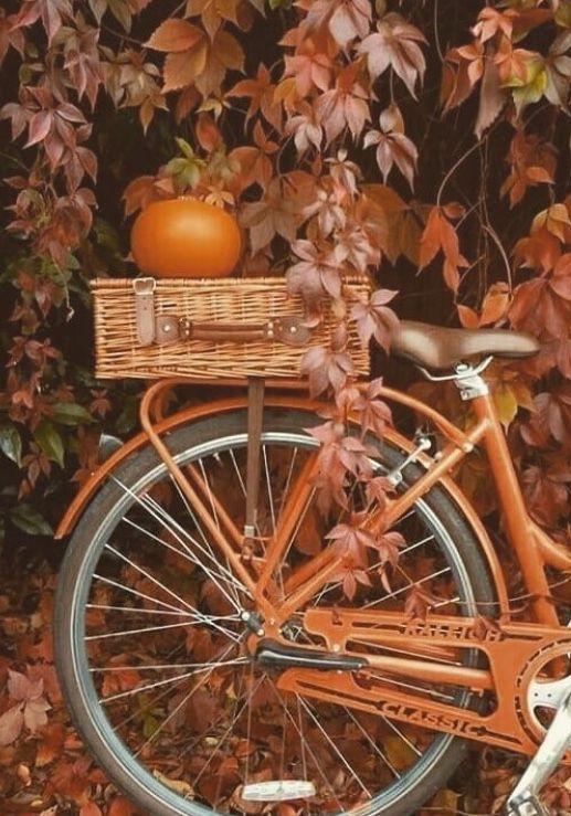 Pin By Kataoun Valypour On Autumn Autumn Inspiration Autumn Image Notes