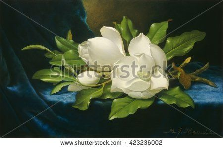 Giant Magnolias on a Blue Velvet Cloth, by Martin Johnson Heade, 1890, American oil painting. Landscape and flower painter Heade moved to Florida in his late career, when he painted this work. Railro - stock photo