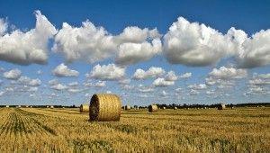 Bio reicht nicht mehr: So sieht die Landwirtschaft der Zukunft aus