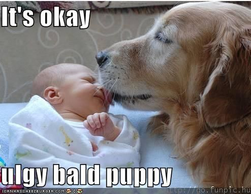 sweet: Bald Puppy, Puppy Love, Golden Retrievers, Ugly Bald, Funny Stuff, Cute Animals, Funnystuff, Socute