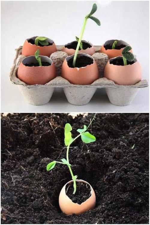 Utilisez des coquilles d'oeufs pour faire pousser des graines