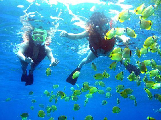 Lặn biển và ngắm san hô