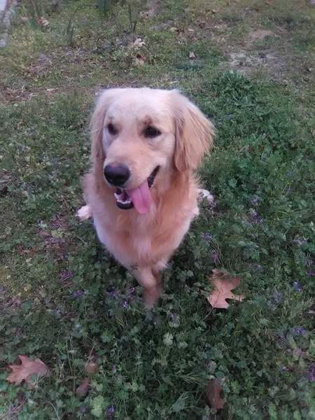 How I Managed My Dog S Seizure Attacks Dog Seizures Dogs Cat