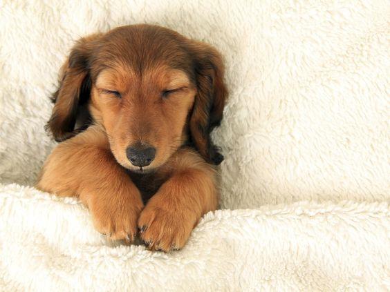 Como fazer seu cachorro dormir a noite toda | #CuidadosPet #SaudeAnimal