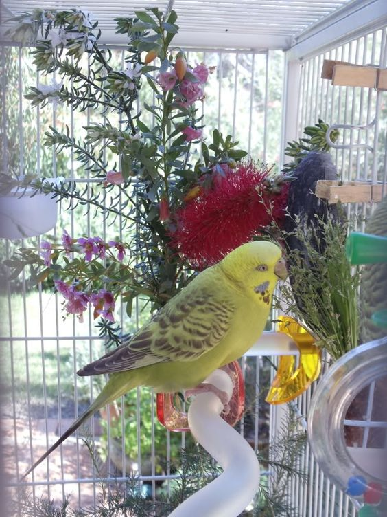 Live plants in the cage? - Talk Budgies Forums