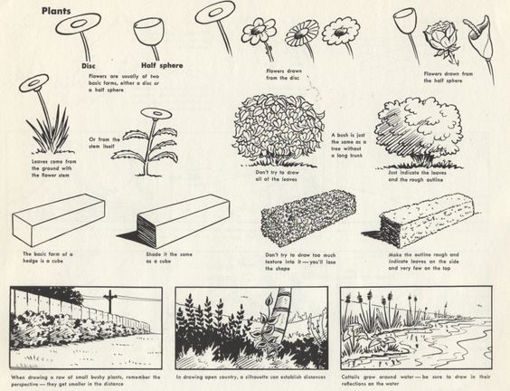 vintage techniques on drawing plants and shrubs from the masters of illustration