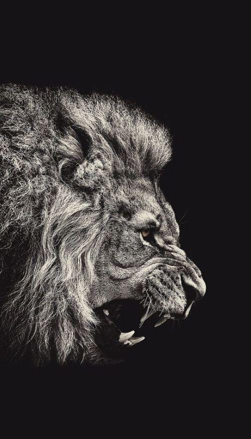 Pin By Marcio Caixeta Santos On Cool Wallpapers Lion Wallpaper Lion Wallpaper Iphone Black And White Lion