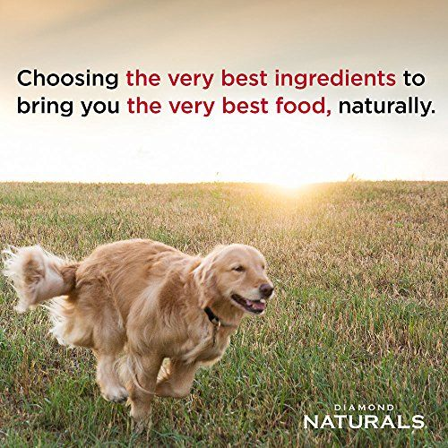 Best Dry Dog Food Reviews For Healthy Living Best Dry Dog Food Dry Dog Food Dog Food Recipes