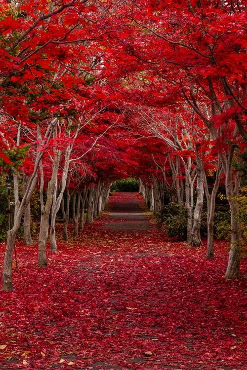 ✯ Crimson Forest - Hokkaido, Japan...yet another reason going to Japan will also be on my bucket list. #japan #nature #travel