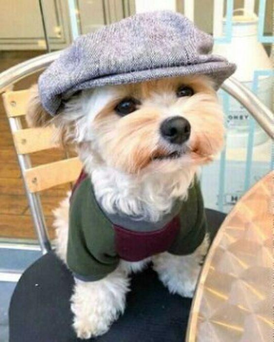 cuando tu perro se viste mejor que tu